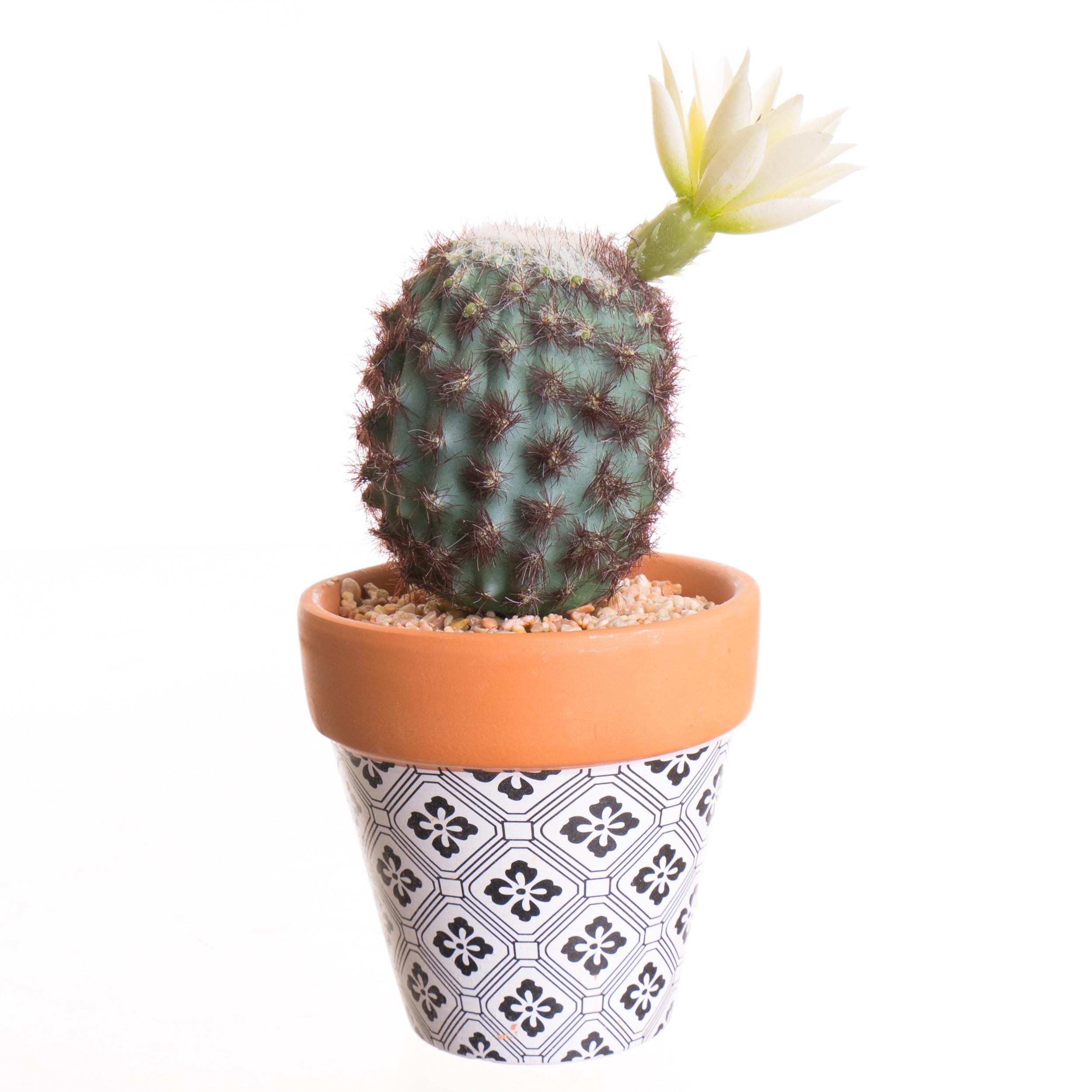 Cactus Artificiel en Pot Argile