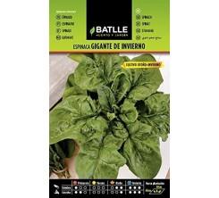 Sachet de graines de légumes EPINARD