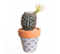 Cactus Artificiel en Pot Argile