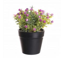 plante artficielle maroc